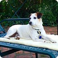 Adopt A Pet :: Petey 2016 (m/c) - Chesterfield, MI