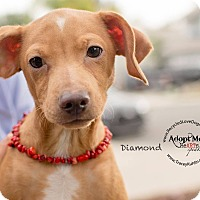 Adopt A Pet :: DIAMOND - Inland Empire, CA