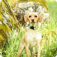 Adopt A Pet :: Sandy - Auburn, CA