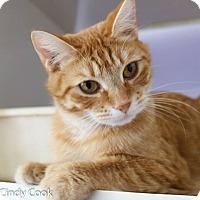 Adopt A Pet :: Zesty - Ann Arbor, MI