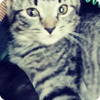 Adopt A Pet :: Ainsleigh - Trevose, PA