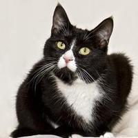 Adopt A Pet :: Lily - Cashiers, NC