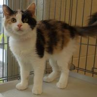 Adopt A Pet :: Savanah - Westampton, NJ