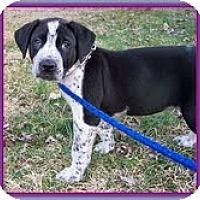 Adopt A Pet :: Pepper - Staunton, VA