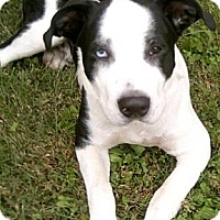 Adopt A Pet :: Trooper - Painesville, OH