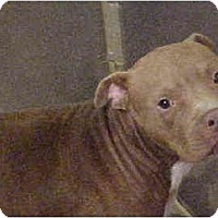 Adopt A Pet :: Tam - Emory, TX