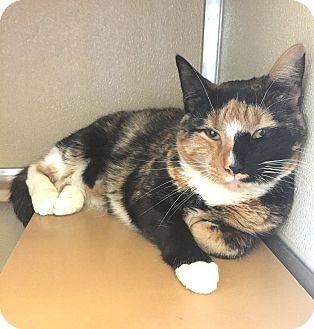 Calico Cat for adoption in Wilmington, Delaware - Peaches