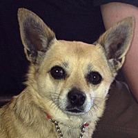 Adopt A Pet :: Gina - Los Angeles, CA