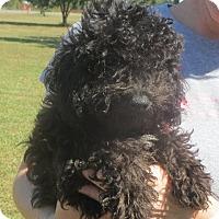 Adopt A Pet :: Sergio - Salem, NH
