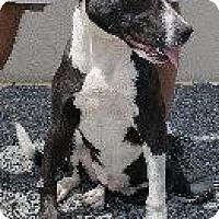 Adopt A Pet :: Tinkerbell - Laingsburg, MI