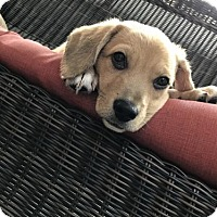 Adopt A Pet :: Doc - Holly Springs, NC