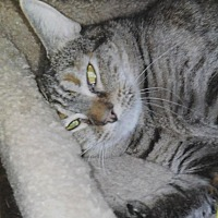 Adopt A Pet :: Paisley - Winston-Salem, NC