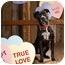 Photo 3 - American Pit Bull Terrier Dog for adoption in Portland, Oregon - Dr. Zulu