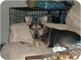 Corgi Mix Dog for adoption in Lewisville, Texas - Maggie Magoo