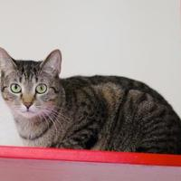 Adopt A Pet :: Chalmers - Charleston, SC