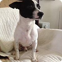 Adopt A Pet :: Freddy - Shannon, GA