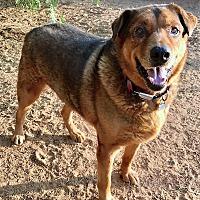 Adopt A Pet :: Oso, super cuddly companion! - Snohomish, WA