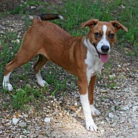 Adopt A Pet :: Sneakers - Rochester, NY