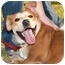 Photo 2 - Labrador Retriever/Shiba Inu Mix Dog for adoption in Marina del Rey, California - Happy