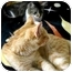 Photo 3 - Domestic Shorthair Cat for adoption in Tillamook, Oregon - KK