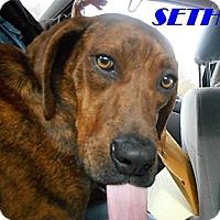 Adopt A Pet :: Seth - Albany, NY