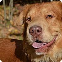 Adopt A Pet :: Shari - Newport, VT