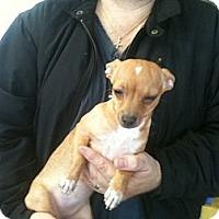 Adopt A Pet :: Tinkerbell - Russellville, AR