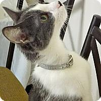 Adopt A Pet :: Jolee - Escondido, CA