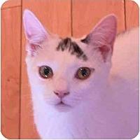 Adopt A Pet :: Milo - Putnam Valley, NY