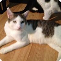 Adopt A Pet :: Mitch - Fort Lauderdale, FL