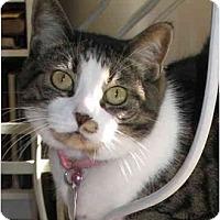 Adopt A Pet :: Katie - Cincinnati, OH