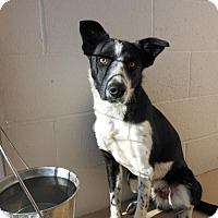 Adopt A Pet :: Trollie - Denver, CO