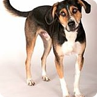 Adopt A Pet :: Buddy - Evergreen Park, IL