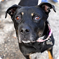 Adopt A Pet :: Talia-Adopted! - Detroit, MI