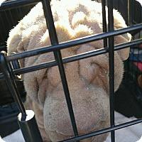 Adopt A Pet :: Emma - pending - Mira Loma, CA