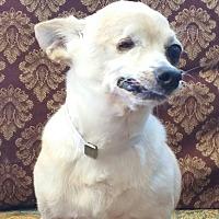 Adopt A Pet :: WILLIE - Houston, TX