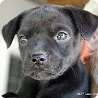 Adopt A Pet :: Freedom - Bedford, VA