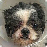 Adopt A Pet :: Maurice - Oak Ridge, NJ