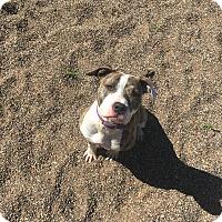 Adopt A Pet :: Rey - Red Wing, MN