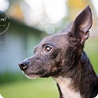 Adopt A Pet :: Cat Grant - Redmond, WA