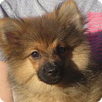 Adopt A Pet :: Fluff - Greenville, RI
