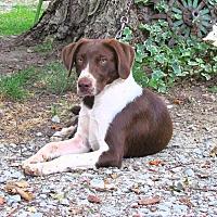 Adopt A Pet :: FRECKLES - Bedminster, NJ