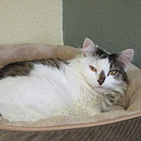 Adopt A Pet :: Helene - Fargo, ND