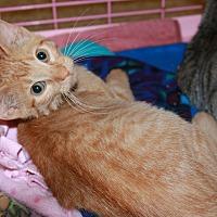 Adopt A Pet :: Elmo - Rochester, MN