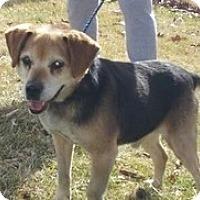 Adopt A Pet :: Nik - Madison, WI