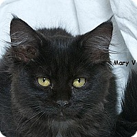 Adopt A Pet :: Mary V - Sacramento, CA