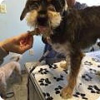 Adopt A Pet :: Rocky - Park Ridge, NJ