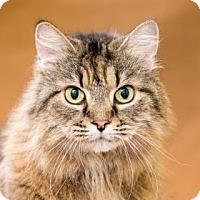 Adopt A Pet :: Fluffy - Chesapeake, VA