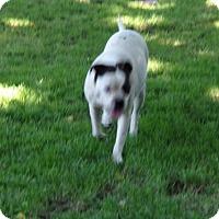 Adopt A Pet :: Lola - Yakima, WA