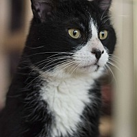 Adopt A Pet :: Bob Farm - Edmonton, AB